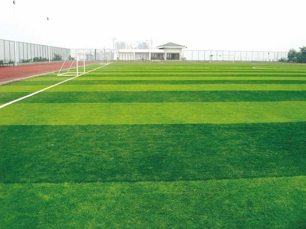 Kĩ thuật bảo dưỡng sân cỏ nhân tạo