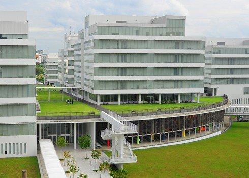 thảm cỏ nhân tạo tuyệt đẹp