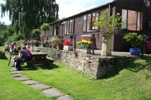 Cỏ nhân tạo dùng trang trí sân vườn, quán cà phê.